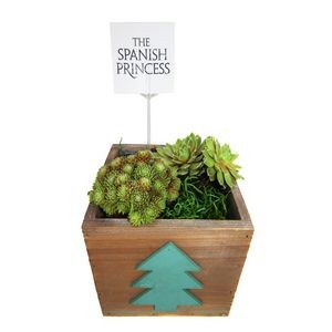 2 Assorted Succulents in Wood Pot with Tree Emblem